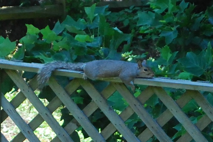 Squirrel lounging
